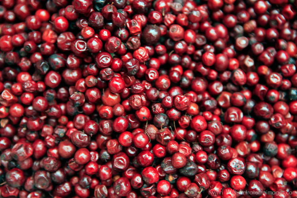 Asia, India, Darjeeling. Red berries of the the Himalayas.