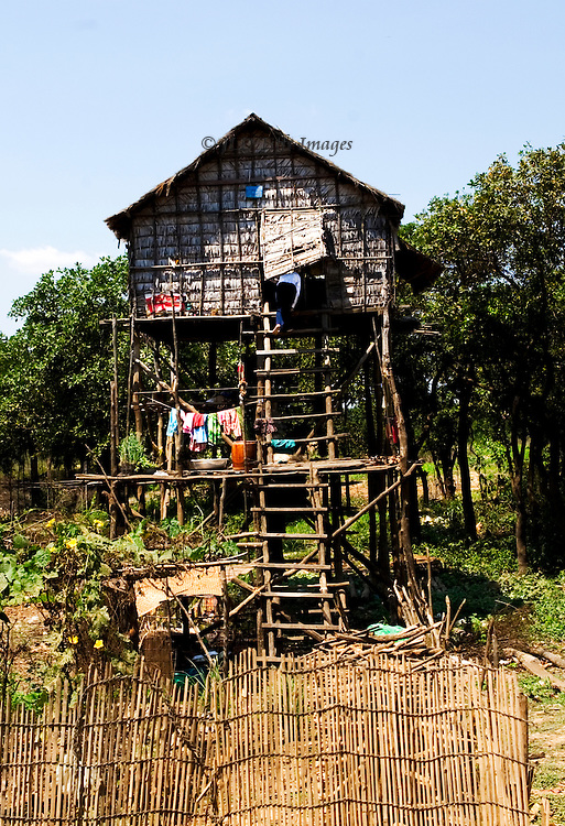 Front view of a stilt house with access ladder standing in the middle of a planted field off the rural road leading to Tonle Sap lake.