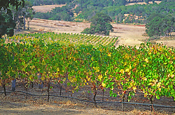 Vineyard Agriculture