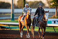 CYPRESS, CA - DEC 17: California Chrome #10, ridden by Victor Espinozain the post parade before the Winter Challenge Staktes at Los Alamitos Race Course on December 17,  2016 in Cypress, California. (Photo by Alex Evers/Eclipse Sportswire/Getty Images)