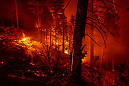 Slash piles burning at night following thinning of mixed conifer forest, with burning cinders falling down a dead tree, north slope of San Juan Mesa, Jemez Mountains, NM, © 2018 David A. Ponton