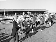 Dublin Horse Show (Aga Khan Cup).1986..08.08.1986..08.08.1986..8th August 1986..The annual Aga Khan Cup competition was held in the R.D.S. Dublin.Four countries competed for the cup this year.FDR Germany,The USA,Great Britain and Ireland. Great Britain were the eventual winners...Celebrating their win The Great Britain team of  (L-R) Peter Charles aboard April Sun, Michael Whitaker aboard Warren Point, Nick Skelton aboard Raffles Apollo and John Whitaker aboard Next Ryans Son display the Aga Khan Cup. In front are Mr Ronnie Massarella,Chef d'Equipe and Mr Frank O'Reilly Chairman of the RDS Executive Committee.