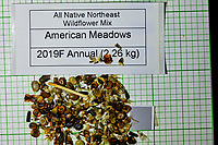 All Native Northeast Wildflower Mixture seeds from American Meadows. Image taken with a Fuji X-H1 camera and 80 mm f/2.8 macro lens + 1.4x teleconverter