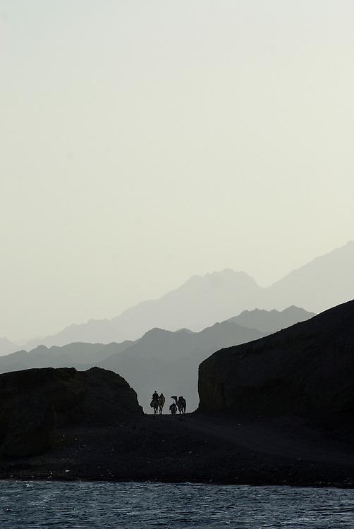 Egypt, Dahab. December/09/2008...A camel caravan silhouetted against the Sinai mountain range at dusk..