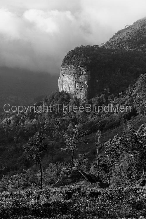 Loolecondera Estate, the rock.