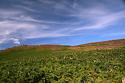 Access land in the Peak District National Park ..., Travel, lifestyle