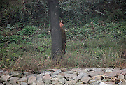 A Soldier stands guard behind a tree in the North Korea-China border near the town of Sunuiju, DPRK October 10, 2006.