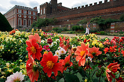 UK ENGLAND SURREY HAMPTON COURT PALACE 19JUL04 - Flowers encircle the palace building in the East Front Garden at Hampton Court Palace. The Palace and its famous royal gardens were founded by King Henry VIII in the sixteenth century and were developed through the centuries by subsequent sovereigns, determined to have the most fashionable and elegant gardens of their era. 2004 is the Year of the Garden at Hampton Court Palace and it is celebrated by a series of special events like the Tudor-costumed garden tours.....jre/Photo by Jiri Rezac ....© Jiri Rezac 2004....Contact: +44 (0) 7050 110 417..Mobile:  +44 (0) 7801 337 683..Office:  +44 (0) 20 8968 9635....Email:   jiri@jirirezac.com..Web:    www.jirirezac.com....© All images Jiri Rezac 2004 - All rights reserved.