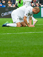 Football — 2016 / 2017 Premier League - Swansea vs Liverpool<br /> <br /> Mike van der Hoorn of Swansea City on his knees after missing a chance at goal in the final minutes of the game  at the Liberty Stadium.<br /> <br /> pic colorsport/winston bynorth