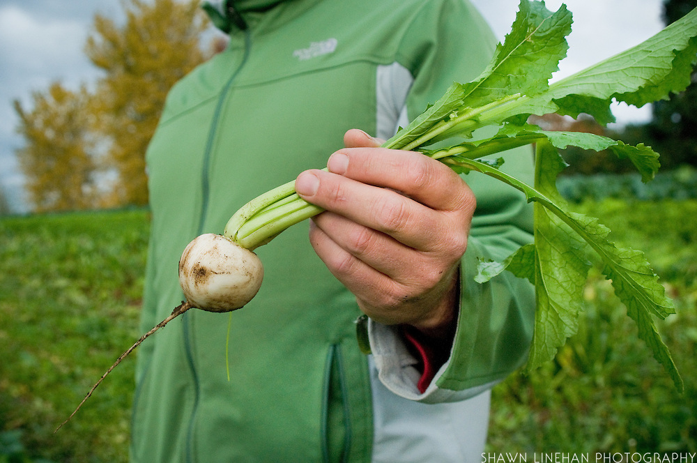Jamie Kitrow, owner of Spring Hill Farm, holds a white turnip, one of the 80 vegetables grown on his farm throughout the year.