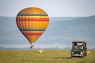 A hot air balloon rises from the ground as tourist ride by in a game viewer at the Maasai Mara National Reserve, Kenya