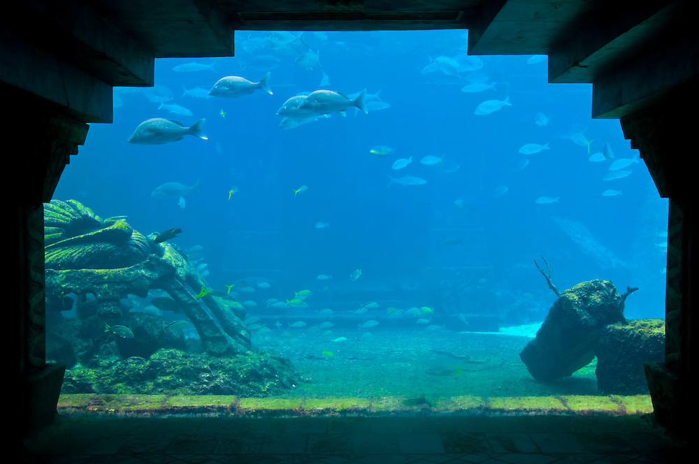 View of Aquarium tank with tropical fishes.