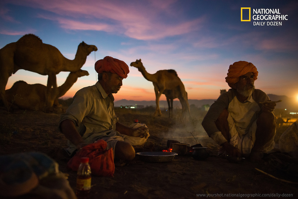 Photograph from Pushkar, titled 'Dinner', published by National Geographic as part of 'Daily Dozen'.<br /> <br /> You may view the same here : http://yourshot.nationalgeographic.com/daily-dozen/<br />  <br /> www.subodhshetty.com