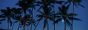 Moon in palm trees<br />