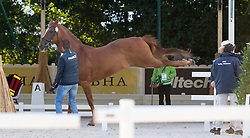 Alexandre Ayache, (FRA), Lights Of Londonderry - Horse Inspection Dressage - Alltech FEI World Equestrian Games™ 2014 - Normandy, France.<br /> © Hippo Foto Team - Leanjo de Koster<br /> 25/06/14