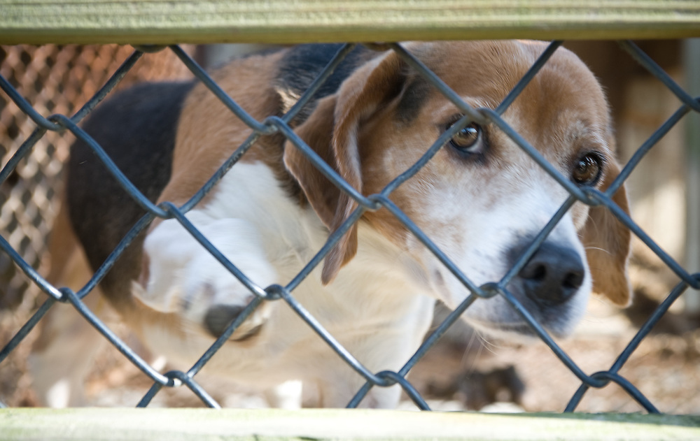 Puppy dog behind fence