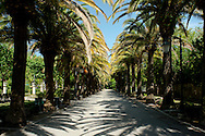 Palm trees lining a path in Giardino Libleo in Ragusa in southeastern Sicily, Italy