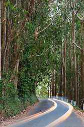 A car's headlights make a light trail amongst trees near Mendocino, California, USA.