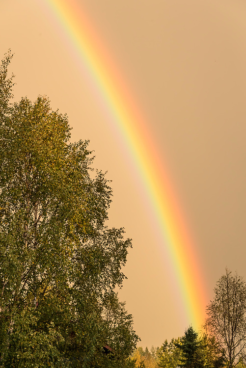 Setting sun illuminates falling rain forming a backdrop for a rainbow in east Anchorage