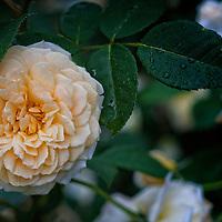 Florals - Flower Photography