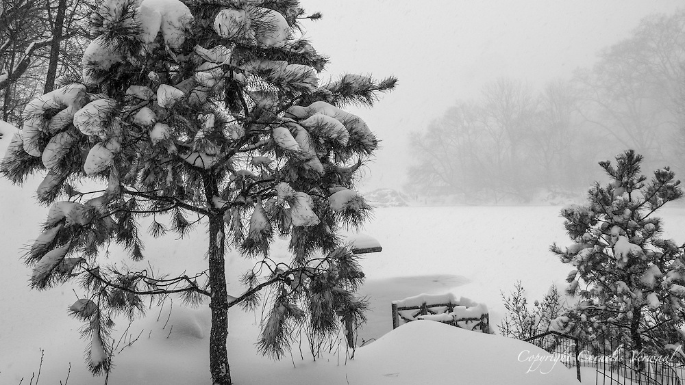 The Lake in Central Park during a blizzard