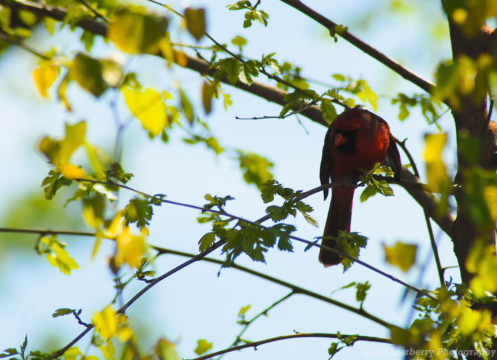 Ohio Northern Cardinals in Columbus, Ohio.