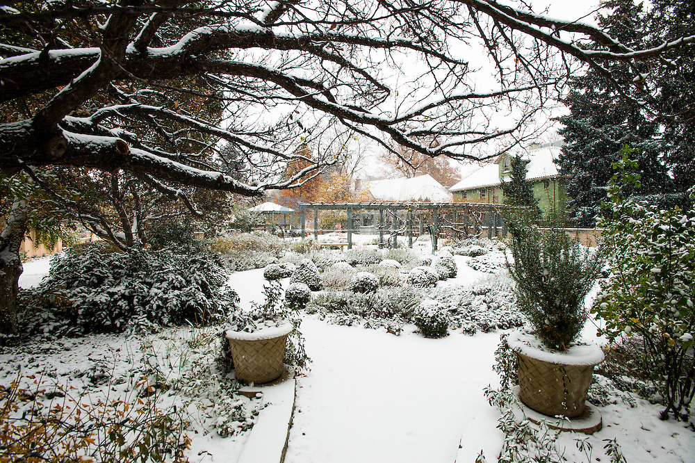 gardens in snow
