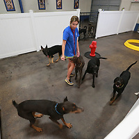 Hannah Richardson plays with the larger dogs before their trip outside at Unleashed in Tupelo.