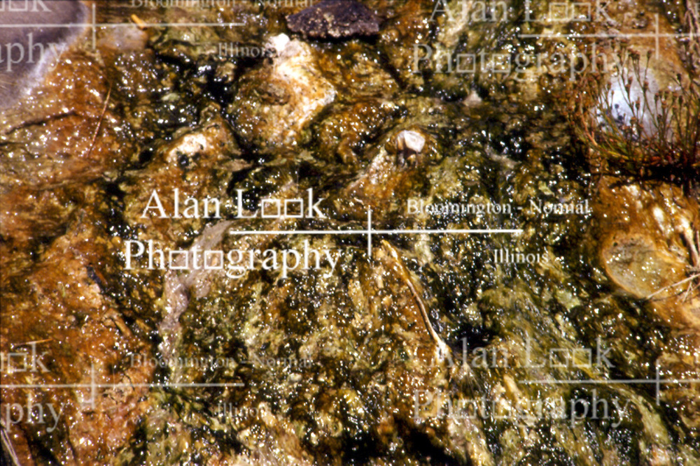 Close up of mineral deposits from a mineral spring in Pagosa Springs Colorado Note: This image was originally produced on film and scanned to produce a digital file.  Some dust may be visible from that scan