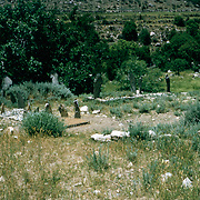 Late Summer? 1965<br /> Overview of cemetery.