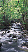Woodland Stream, Greenbrier, Great Smoky Mountains National Park