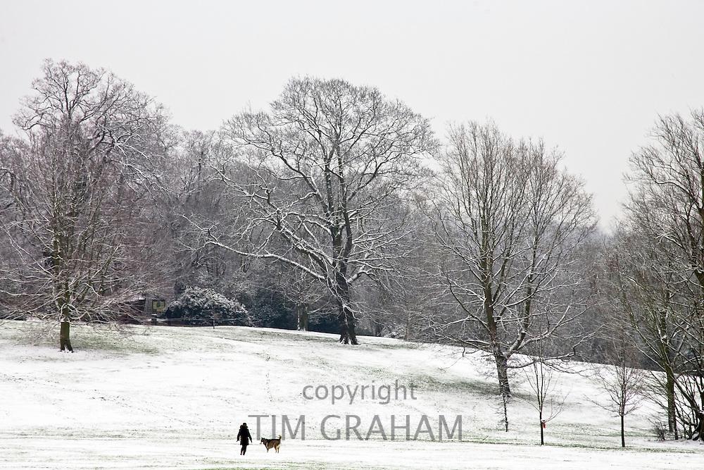 Woman walks dog on winter's day across snow-covered Hampstead Heath, North London, England, United Kingdom