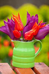 Tulipa 'Ballerina'  and T. 'Purple Dream' in green jug