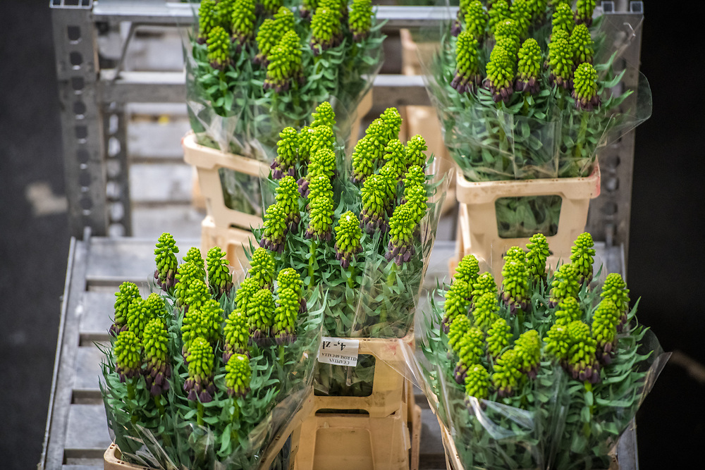 Royal Flora Holland flower auction in Amsterdam NL.  Worlds largest flower auction.