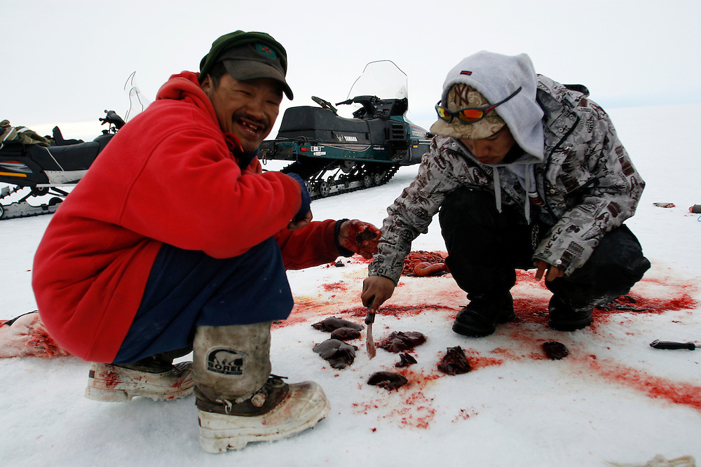 Sasa Samson 37 and PJ 17 cutting and eating the raw liver of a Seal in Resolute bay Tuesday June 12 2007....The Inuit?s hunting seals for food, every part of the seals is used or for food or for worm cloth.........