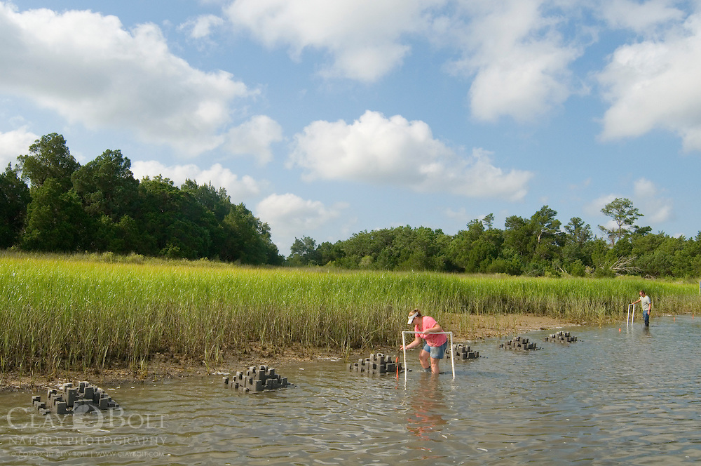 TNC Marine Restoration Specialist Joy Brown inspects newly installed oyster castles against the rising tide.