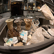 Plastic garbage found in the gastrointestinal system of 10.6m female sperm whale (Physeter macrocephalus) found off Jurong Island, Singapore in July 2015. This whale also had injuries in the caudal area that may have been caused by a ship propellor. This plastic and the skeleton of the sperm whale is on display at the Lee Kong Chian Natural History Museum in Singapore.