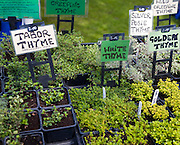 Herb plants with labels for sale during garden event at Helmingham Hall, Suffolk, England