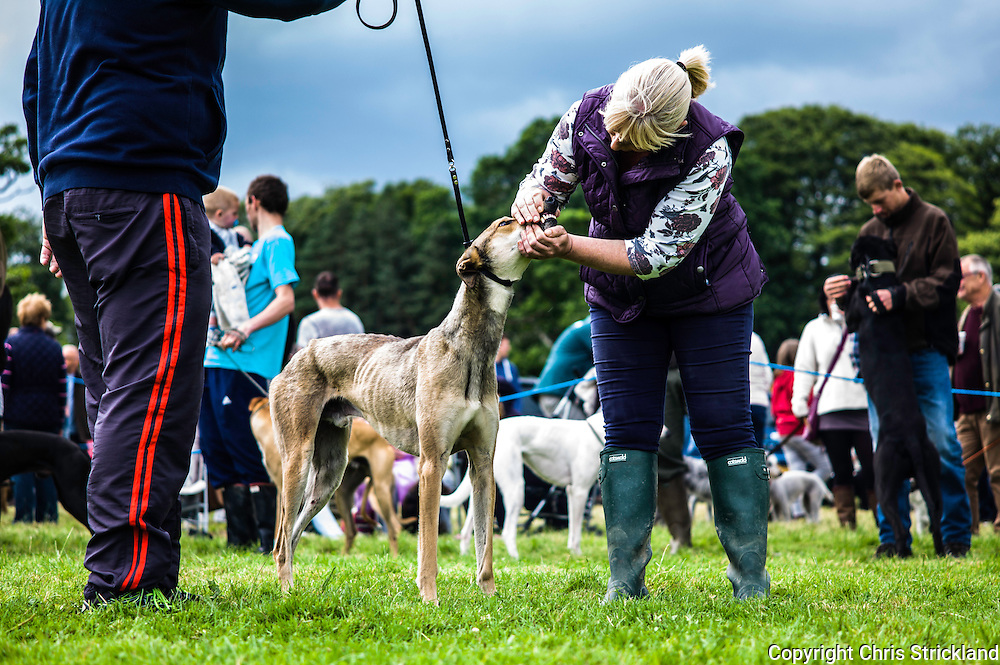 The Wells, Bedrule, Bonchester Bridge, Hawick, UK. 26th July 2015. The Jedforest Hunt Hound, Terrier & Lurcher show in the countryside of the Scottish Borders brings together a plethora of people in a celebration of their hunting breeds. Here Lurchers are judged in the showing ring.