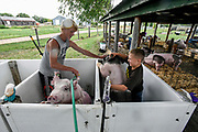 14-year-old Rylee Schultz, left, helps Quinton Berg, 11, both of Emery, wrestle his pig down off the stall while Schultz rinses off his own pig while getting ready to show off their pigs during the Hanson County 4-H Achievement Days on Monday afternoon in Alexandria. (Matt Gade / Republic)