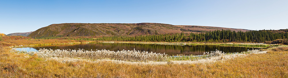 Composite panorama of pond with reflections at Wonder Lake region on this rare sunny day in Denali National Park in late fall in Southcentral Alaska. Morning.