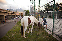 A boy pets a horse in in Complexo do Caju, in Rio de Janeiro, Brazil, on Tuesday, May 21, 2013. <br /> <br /> In the early hours of Sunday, March 3, 2013, about 1,400 Brazilian security forces occupied 13 communities during a joint public security operation to install a Pacifying Police Unit (UPP) in two Rio de Janeiro favelas, Complexo do Caju and Barreira do Vasco. Elite police units backed by armored military vehicles and helicopters invaded the neighborhood in an on-going policing program aimed to drive violent and heavily armed drug gangs out of Rio's poor communities, where the traffickers have ruled for decades. For the community of Caju, that is ADA (Amigos de Amigos) and CV (Comando Vermelho).