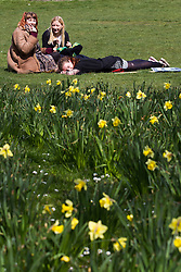 © Licensed to London News Pictures . 21/04/2013 . Brighton , UK . Three young women enjoy the spring sunshine amongst the daffodils in park land by St James Street near to Brighton Promenade this afternoon (Sunday 21st April) . Photo credit : Joel Goodman/LNP