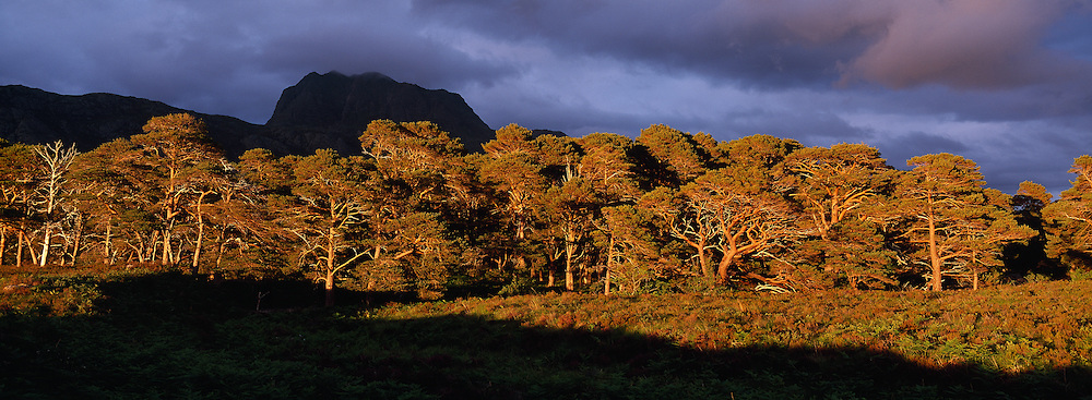 Scots pines and Slioch, Glen Grudie, Wester Ross