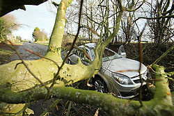 © Licensed to London News Pictures. 29/01/2016. Maghera, UK. A fallen tree lays on top of a car on the Mullagh Road in Maghera, County Londonderry after Storm Gertrude caused power cuts and a number of blocked roads with trees. The driver, a man, suffered minor cuts and bruises . Photo credit : Paul McErlane/LNP