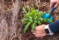 THEMENBILD - eine Frau setzt eine Rucola Pflanze ein, aufgenommen am 10. April 2018 in Kaprun, Österreich // a woman is planting arugula, Kaprun, Austria on 2018/04/10. EXPA Pictures © 2018, PhotoCredit: EXPA/ JFK