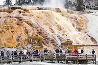 Visitors to Mammoth Hot Springs take in the colorful terraces of Pallete Spring in Yellowstone National Park.