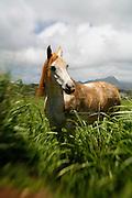 Horse, Kauai, Hawaii<br />