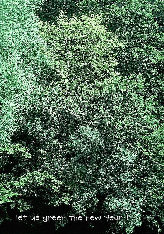 Several different kinds of trees in full leaf clustered together