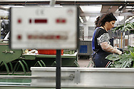 Cooperativa Ucflor (Unione Cooperativa Floricoltori della Riviera) : si trova all'interno del Mercato dei fiori di Sanremo.. *** Local Caption ***